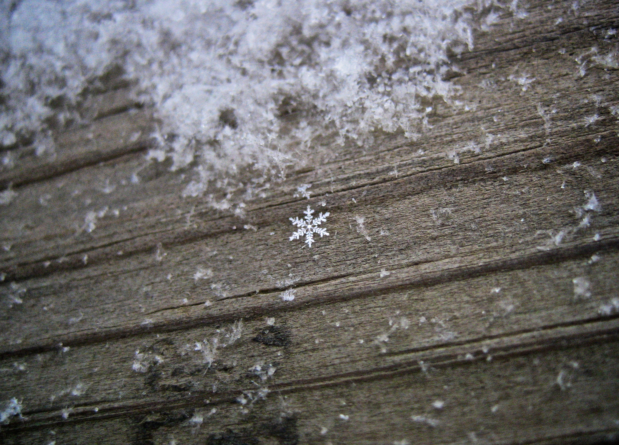 APerfectSnowflake_Lindsy.Carranza.Flickr