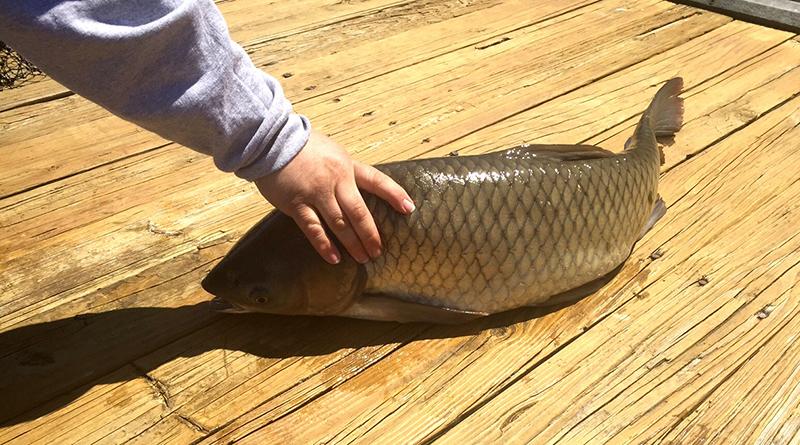 LI_Colossal Fish (2)