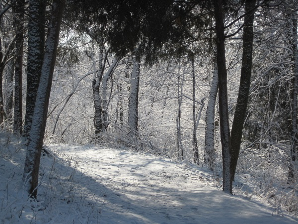 Snow transforms the trail at Woodland Mound