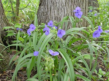 flowers_floristic survey_351x262