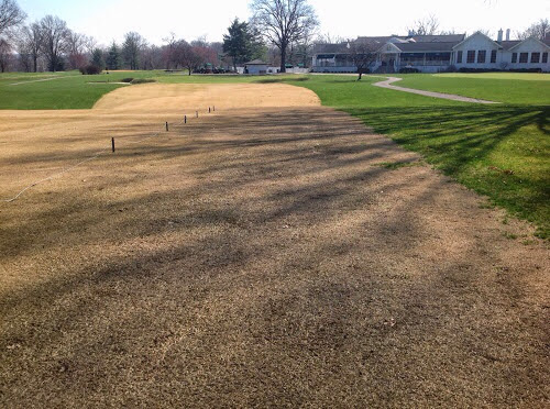 Zoysia grass in the wintertime at Hyde Park Country Club