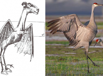 Jersey Devil and Sandhill Crane (Photo courtesy of Wikipedia & US Fish and Wildlife Service on Flickr)