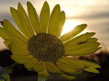 sunrise-backlight-flower