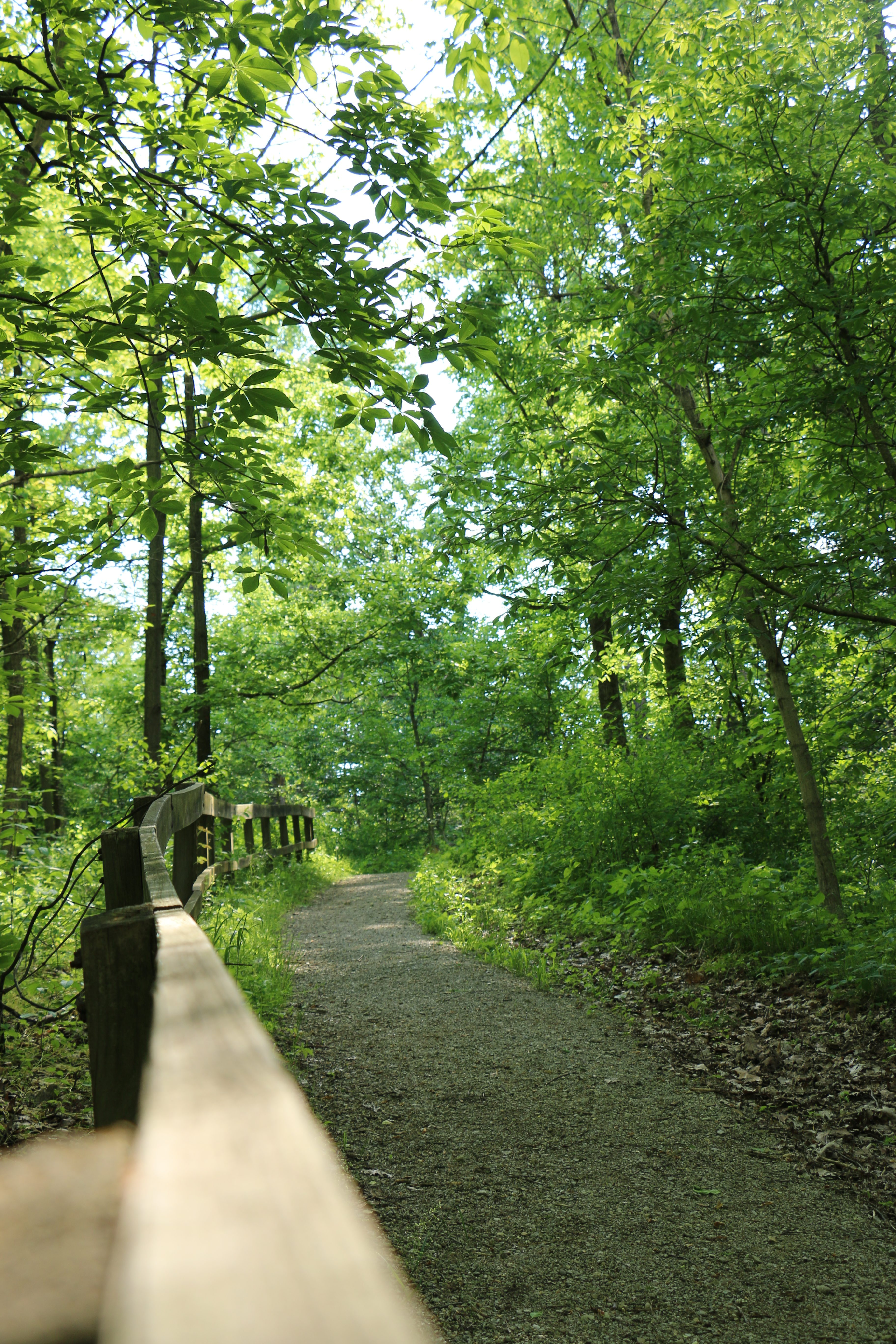 Little Turtle Trail Shawnee Lookout