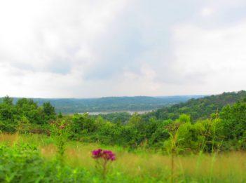 Hedgeapple Trail Woodland Mound