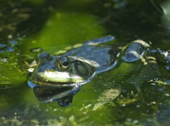 Frog in Highfield Discovery Garden