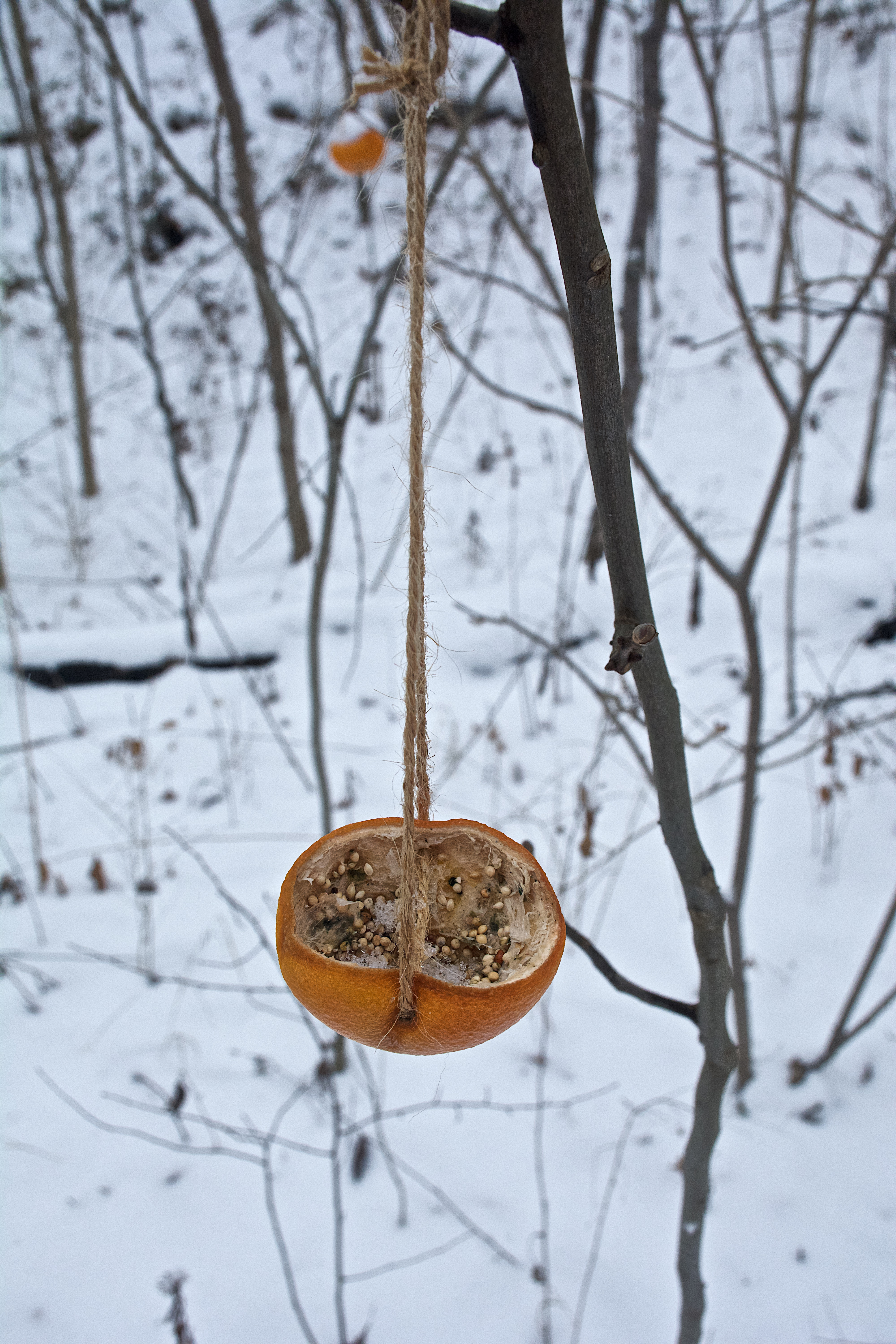 A hollowed out orange peel hangs from a tree amidst a snowy backdrop.