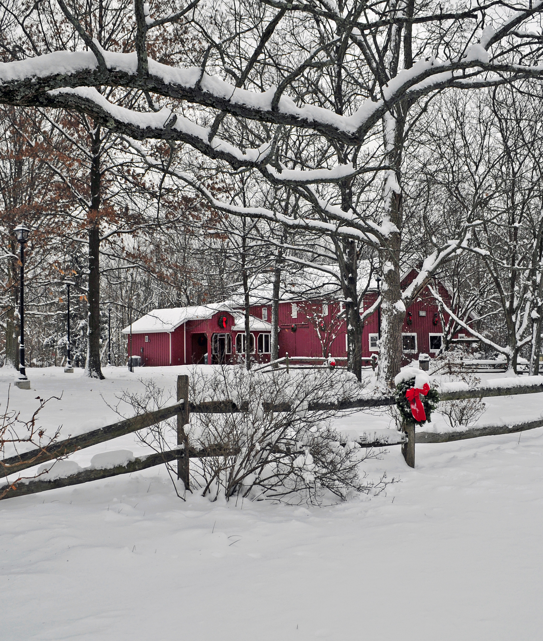 Snow blankets trees, shrubbery, the ground and Ellenwood Nature Barn.