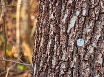 A close-up of a tree trunk shows the different shades of brown. The tree also has an identification tag on it.