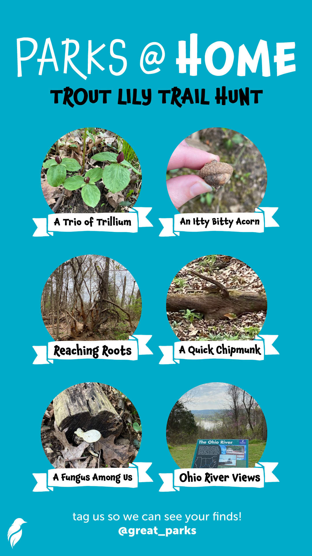 Trout Lily Trail Hunt