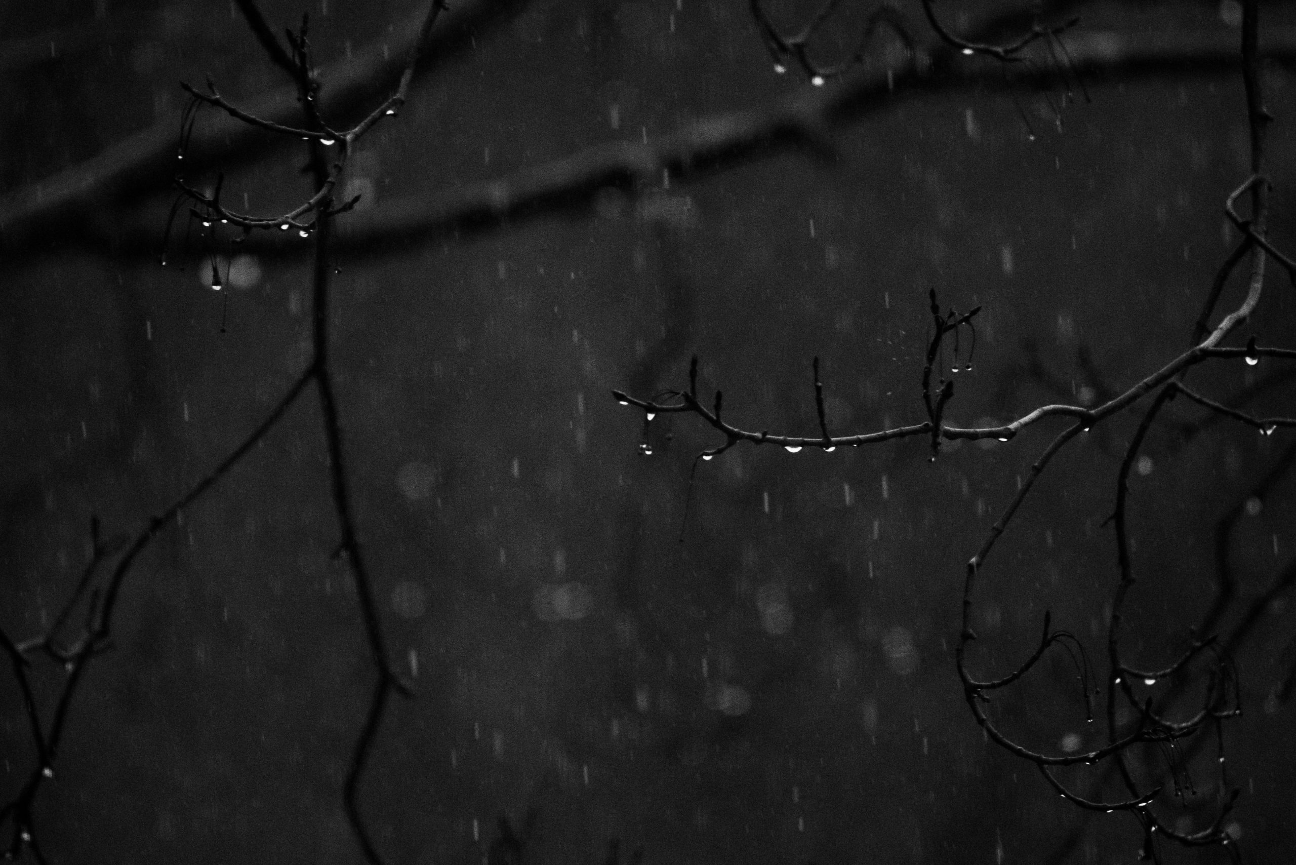Rain falls on tree branches.