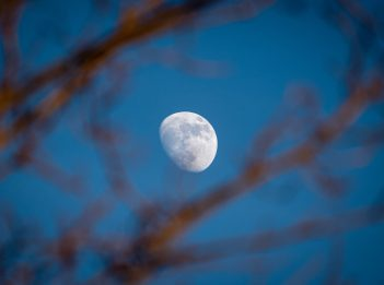 The moon shines through tree branches at dusk.