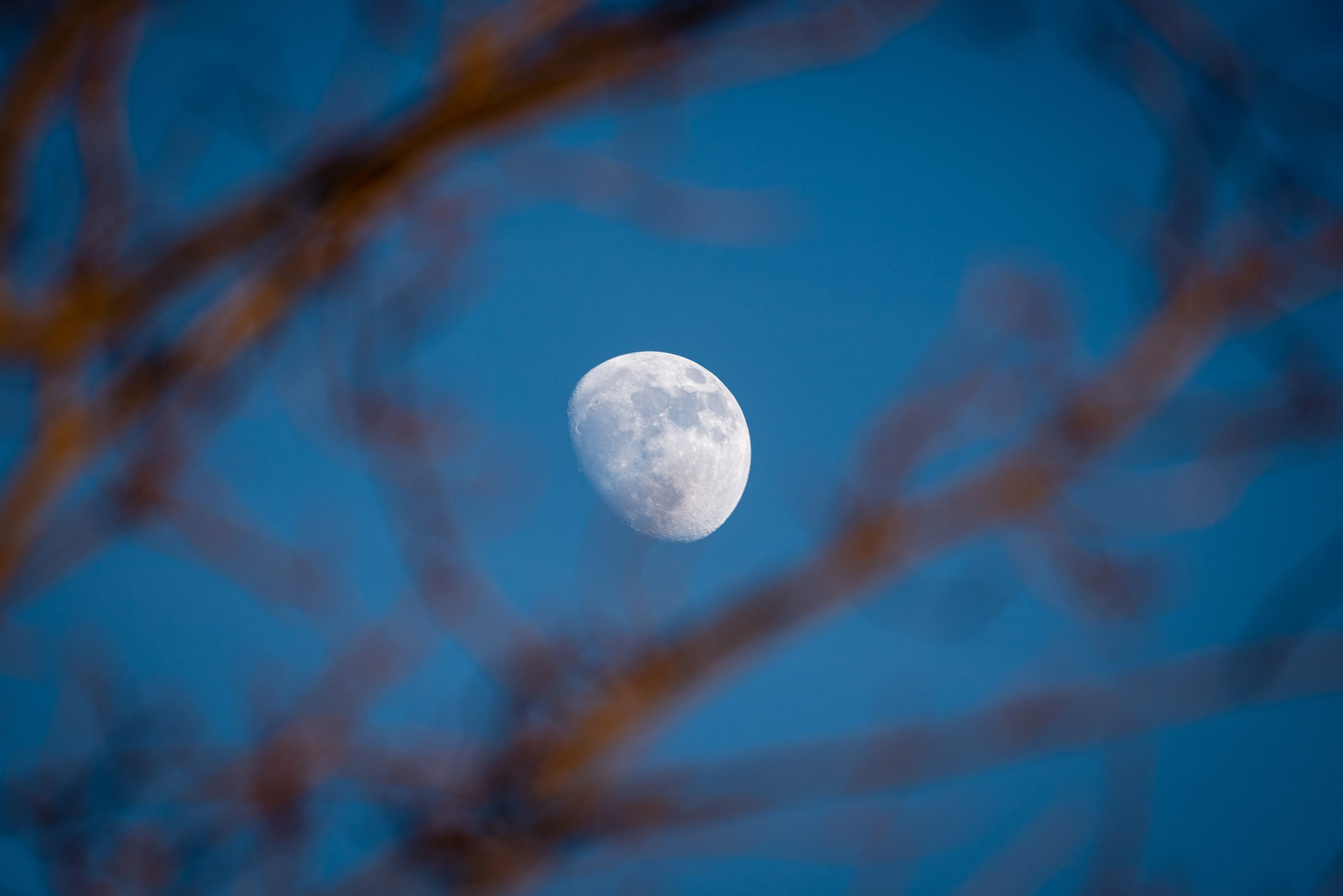 The moon shines against a blue sky through tree branches at dusk.