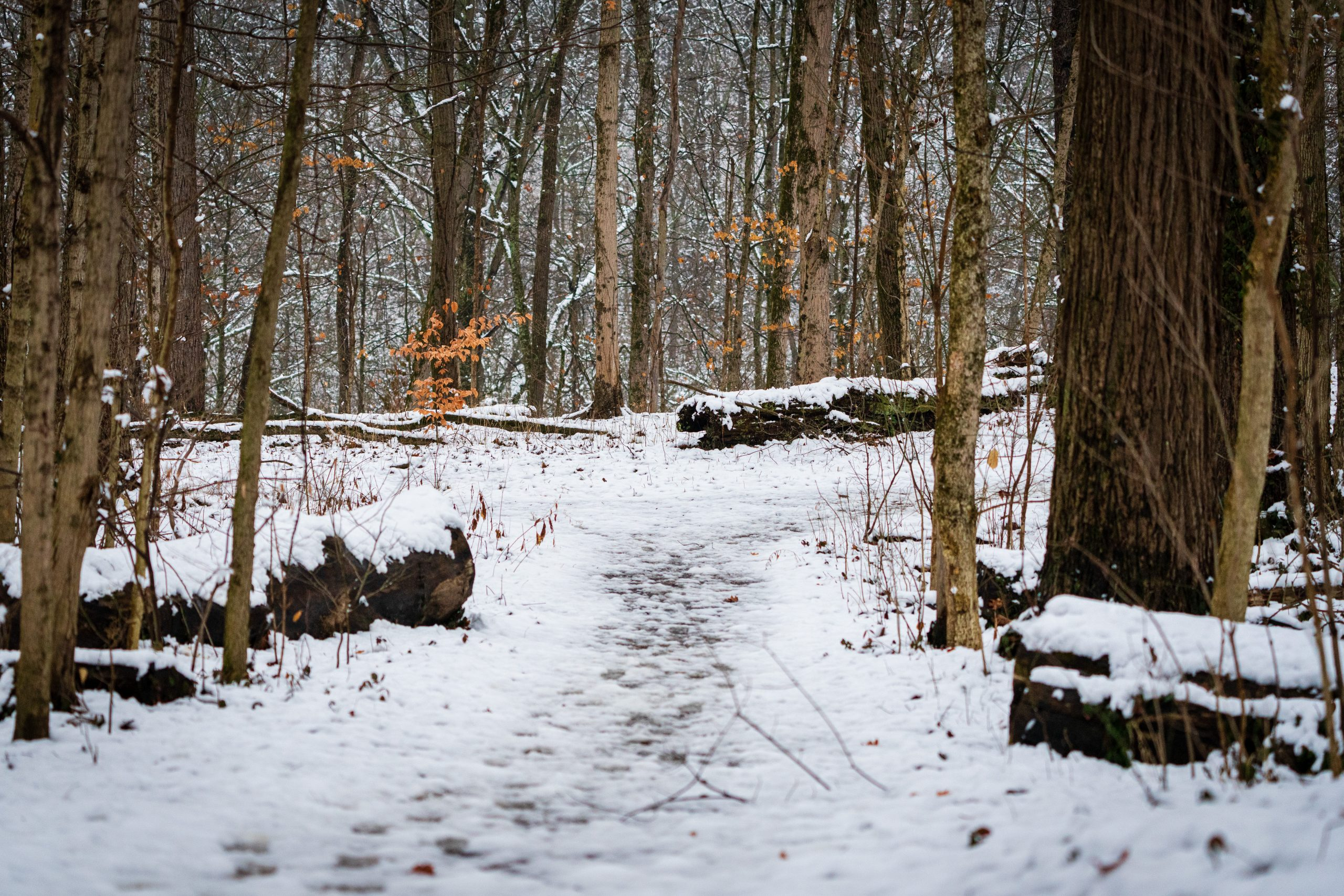 Snow covers the Great Oaks Trail at Winton Woods.