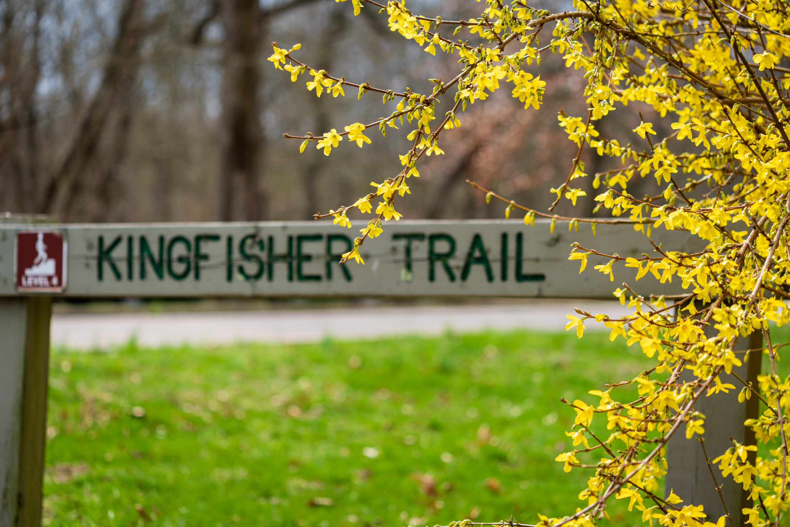 A trailhead sign marks the start of the Kingfisher Trail. A tree with yellow leaves is in front of the sign.