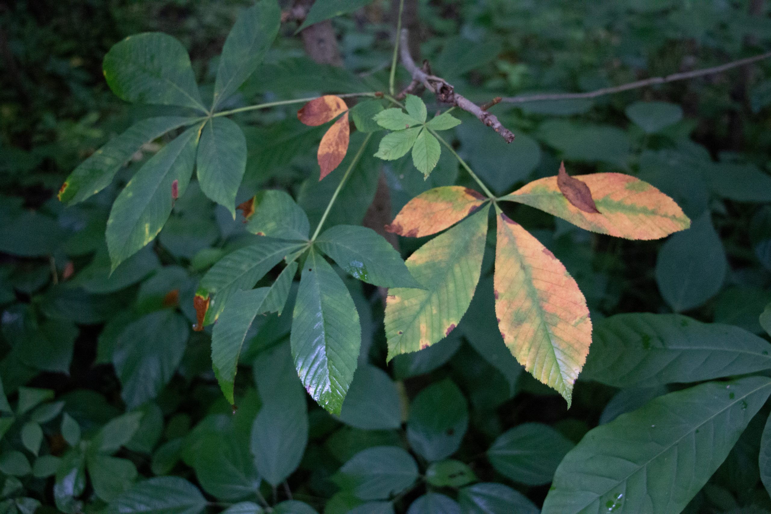 Green and yellow leaves on a branch.
