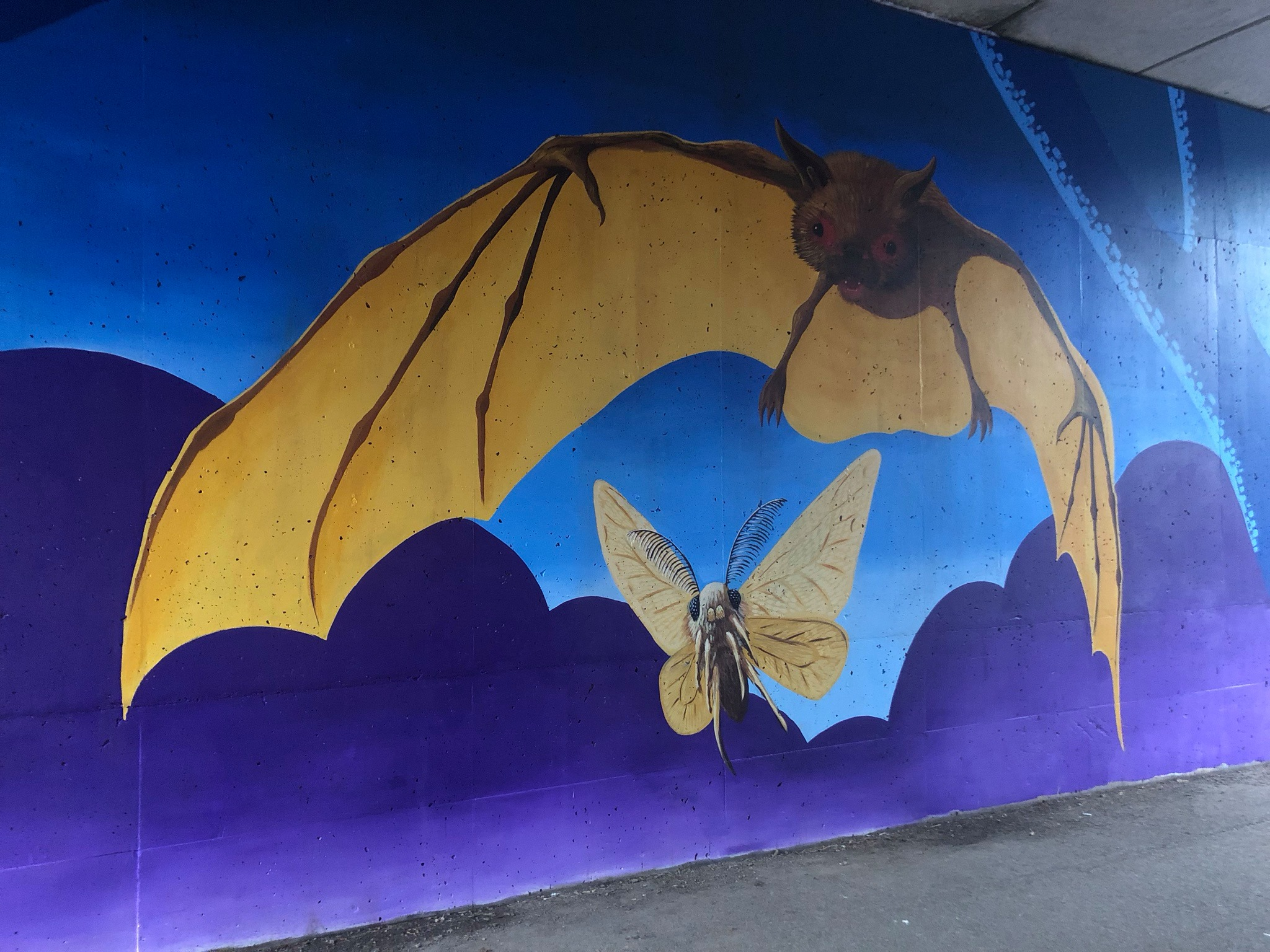Indiana Bat mural on the Little Miami Scenic Trail