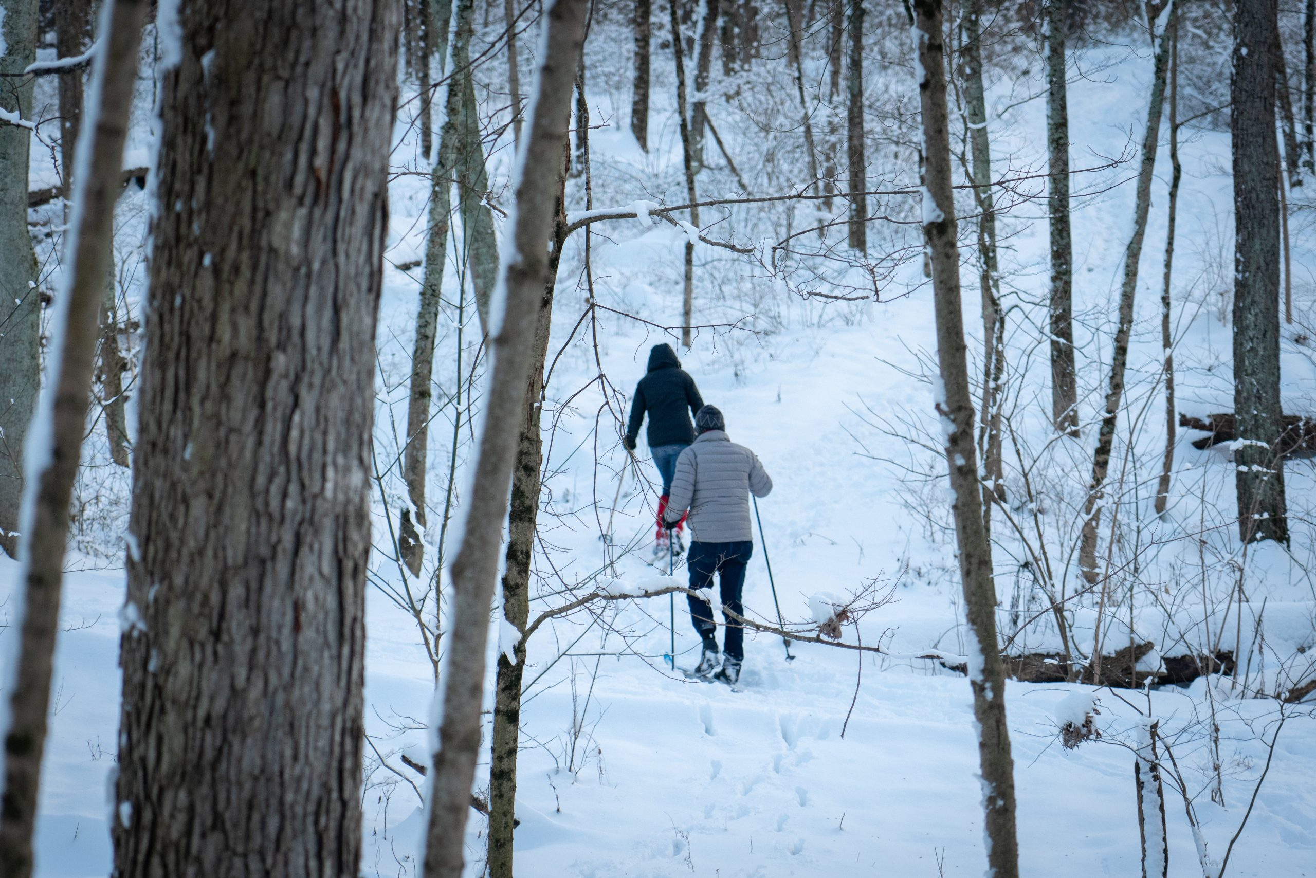 A man and woman go cross-country skiing in the snow, heading away from the camera.