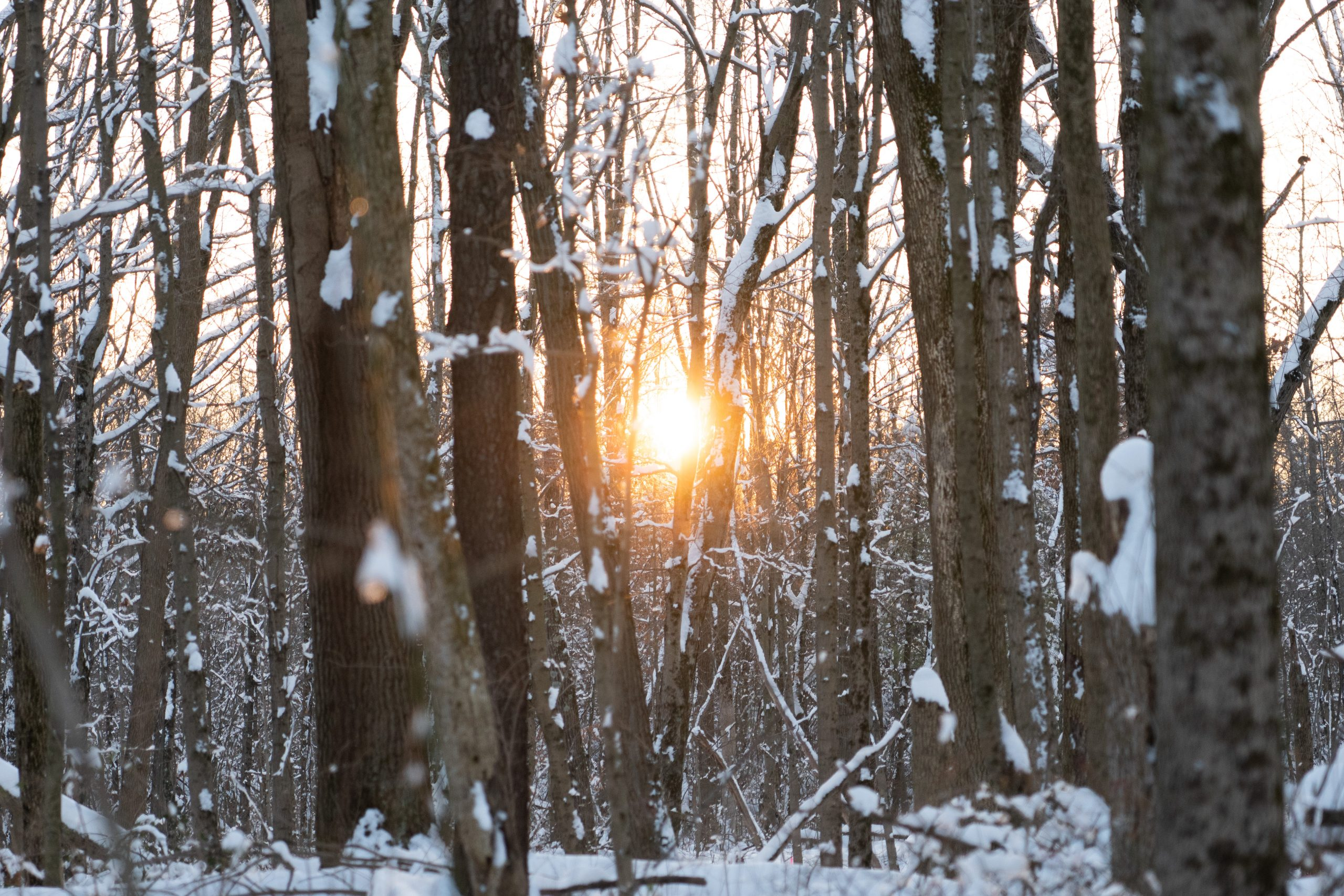 The sun sets among snow-covered trees at Winton Woods.